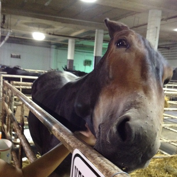 funny photo of  a mule
