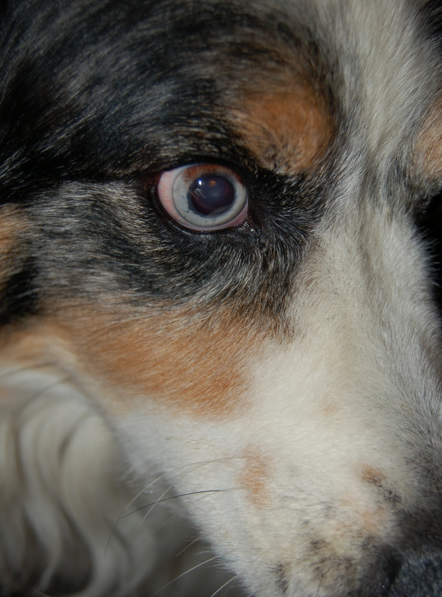 Close up of a dog's eye